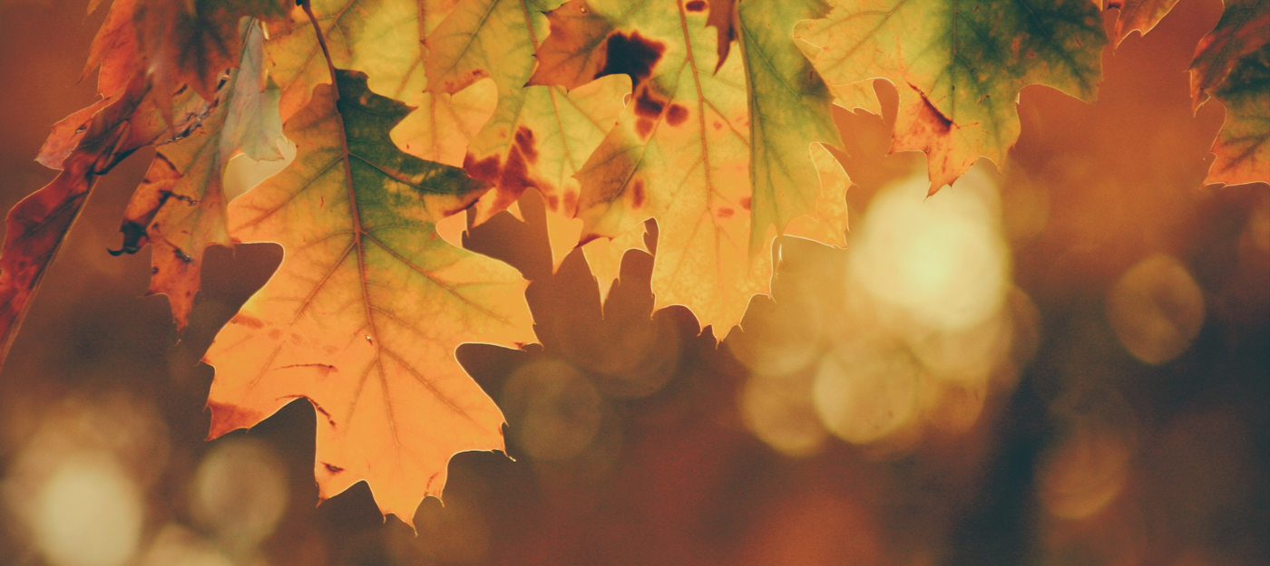 Fall background with autumn leaves
